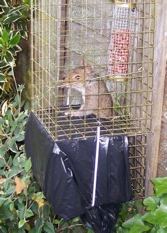 Covered Refuge Cage attached below the trap
