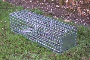 Professional Mink and Grey Squirrel Cage Trap